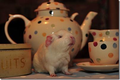 Fairy takes tea! (8)