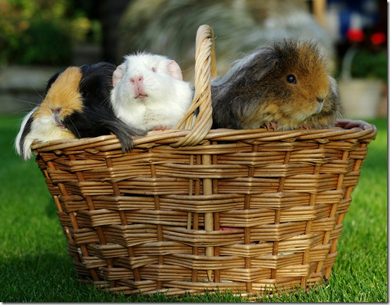 A basket full of piggies! (2)