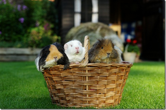 A basket full of piggies! (5)