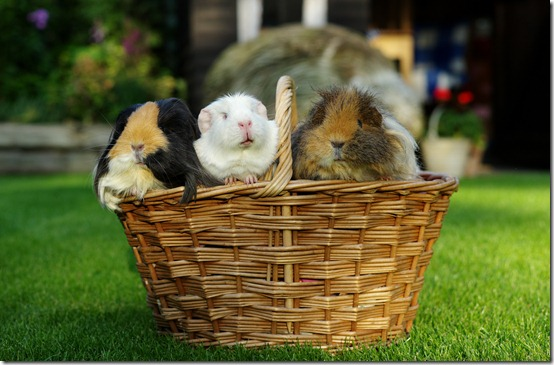 A basket full of piggies! (6) copy