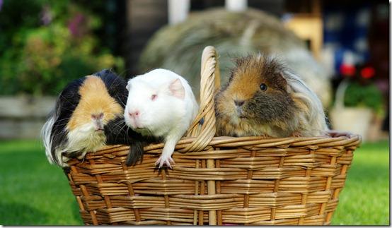 A basket full of piggies! (7)