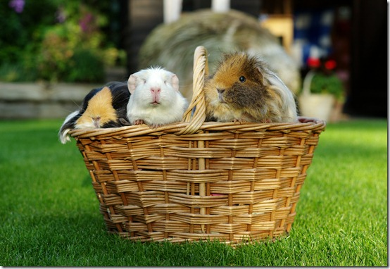 A basket full of piggies! (9) copy