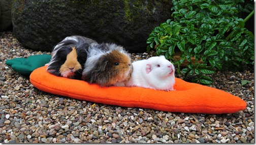 The Team test the carroty comfy cushion (2)