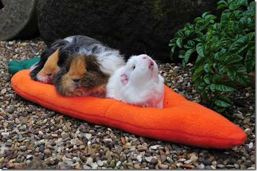 The Team test the carroty comfy cushion (5)