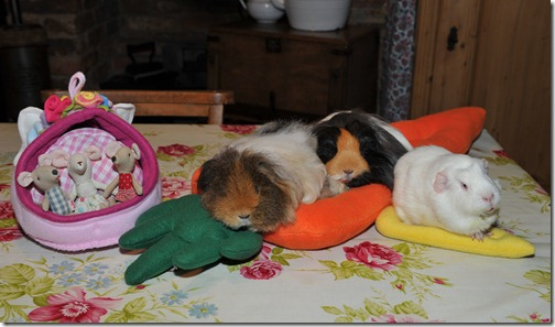 The wrong beds! (1)