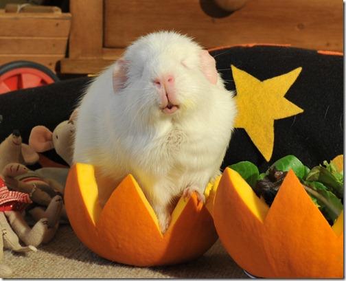 Halloween treats (12)b