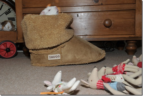 Mouses in the Smugg Boot! (25)