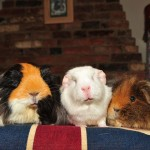 Piggy In The Middle!