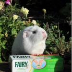 Fairy Makes An Important Announcement!