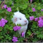 Flowery-Fairy!