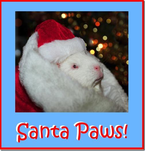 Santa Paws 1