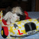 Fairy's Taxi Service!