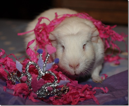 Princess Fairy in her tiara! (9)