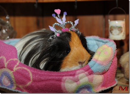 Princess Piggies! (17)