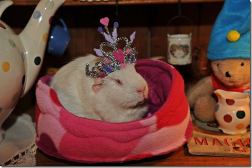 Princess Piggies! (4)