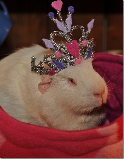 Princess Piggies! (6)