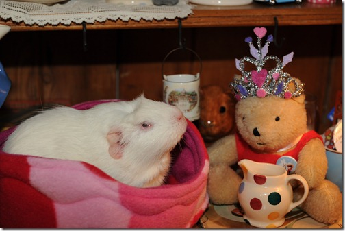 Princess Piggies! (8)