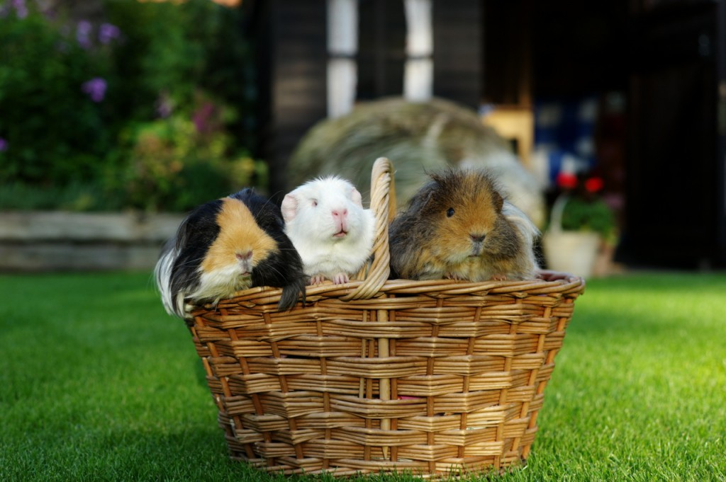 A basket full of piggies!5