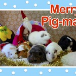 Wishing You A Very Merry Pig-Mas!